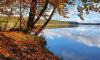 Ufer des Stechlinsee an einem goldenen Herbsttag