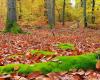Waldboden am Stechlinsee mit saftig grünen Moos