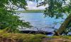 Blick auf den Stechlinsee von mosbewachsener Baumbank