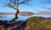 Stechlinsee an einem sonnigen Herbstmorgen