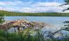 Blick auf Stechlinsee mit umgestürzten Baum am Ufer