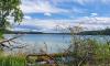 Ufer vom Stechlinsee mit wildem Uferbereich