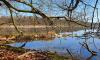 Stechlinsee mit wildwüchsigen Uferbereich im Spätherbst