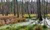 Große offene Sumpffläche der Briese im Herbst