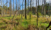 Durch die Briese überfluteter Wald an sonnigen Herbsttag