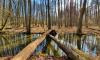 Zwei umgestürzte Bäume über die Stobber als Brücke