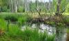 Morast auf Wanderung zwischen Roofensee und Nehmitzsee
